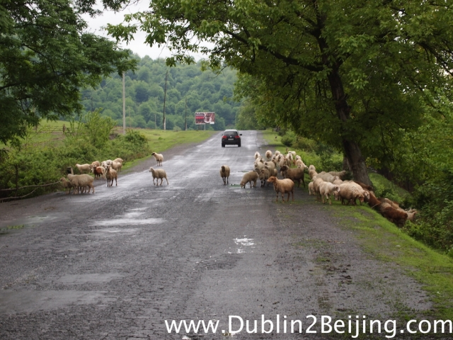 Entering Azerbaijan reminded me of home: Green, wet and lots of sheep