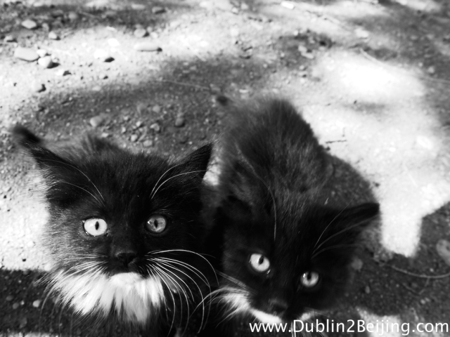 Kyrgyz Kittens. These two cuties appeared from a tree while I was tending to the results of my latest bout of food poisoning. We gave them some muffins.