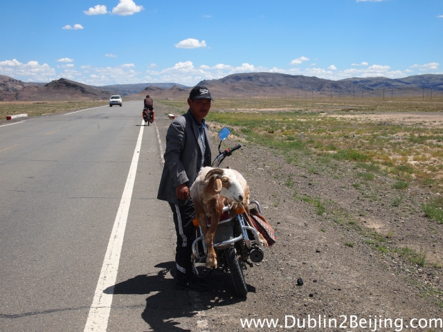 Saw this lunatic with a sheep on the back of his motorbike.