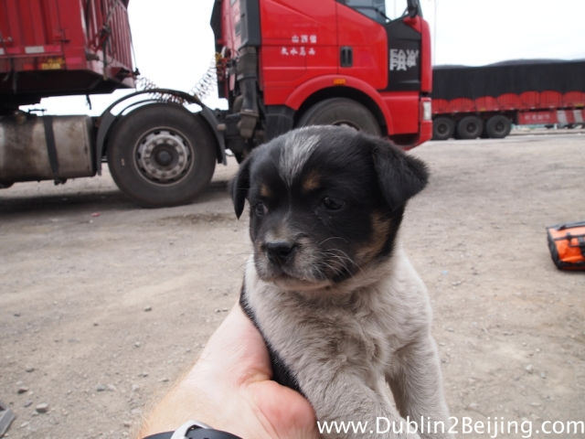 A cute puppy I met at a truckstop