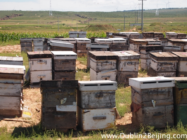 The road from Dingbian to Jingbian was honey country. Full of bee hives and sometimes I was surrounded by swarms of bees. No stings thankfully!